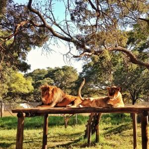Zimbabwe wild life